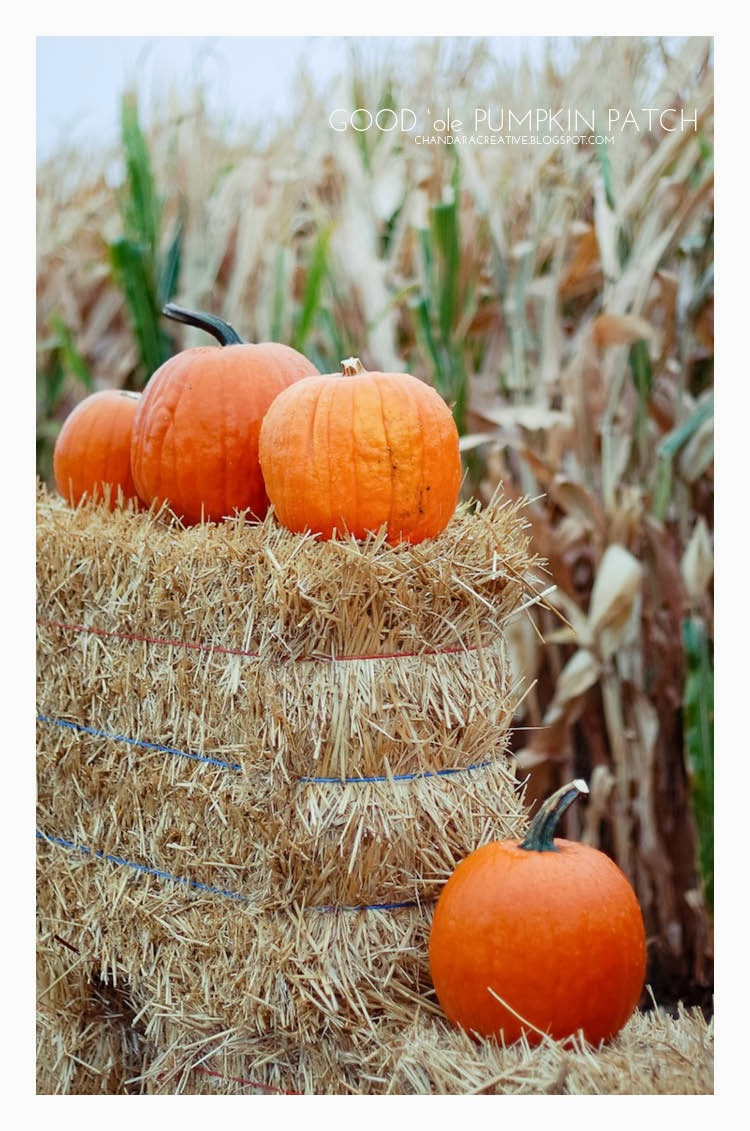 pumpkin patch | Photography via Chandara Creative