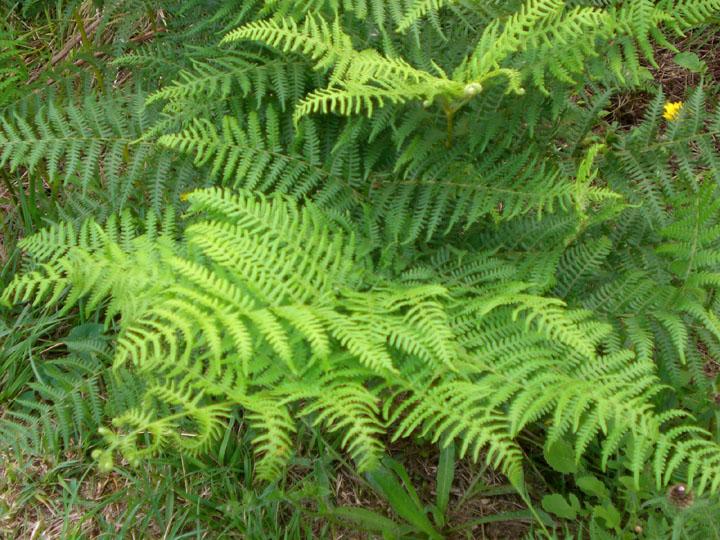 Las plantas y su clasificacion for Plantas decorativas tipos