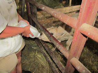 family fun on a farm