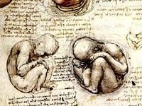 Foetus, planche de Leonard de Vinci