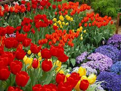 Jardins colorés sont beaux...