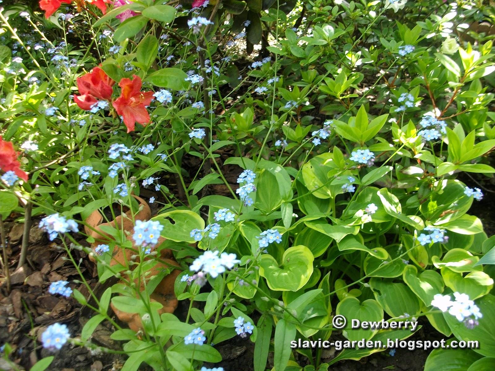 Slavic Garden - Słowiański Ogród: Outdoor beauties ...