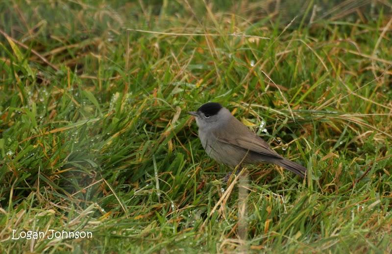 Logan's Nature Blog: Fair Isle: Awesome Autumn 16th-25th of ...