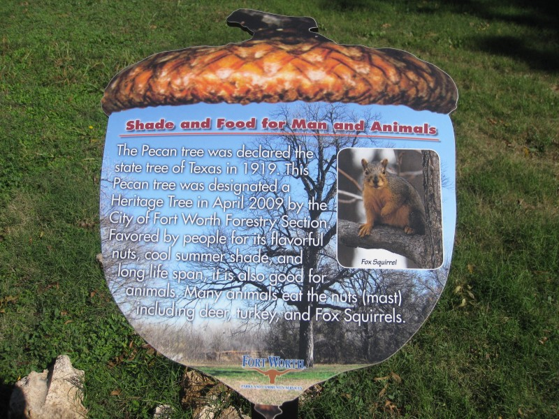 durango texas the state tree of texas is a heritage pecan in fort
