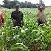 Koramil Arosbaya Dukung Petani Kembangkan Jagung Organik