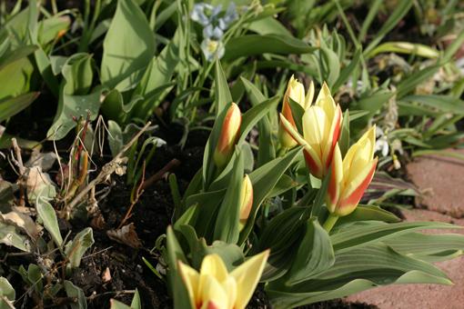 Trädgård O Sånt : Jennys g och sånt april
