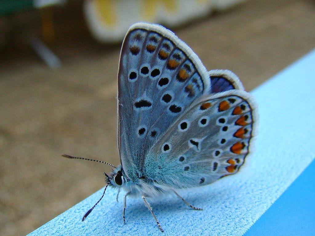Foto eines sitzenden Schmetterlings