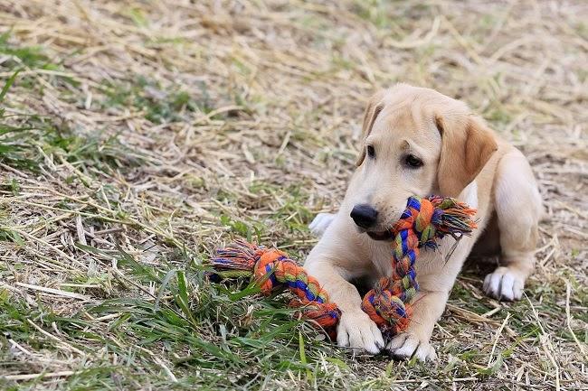 Behawioralne zabawki dla psów