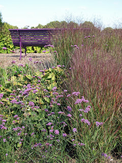Sussex Prairies Garden. Amazing flowers and good example of garden design. Purple planting