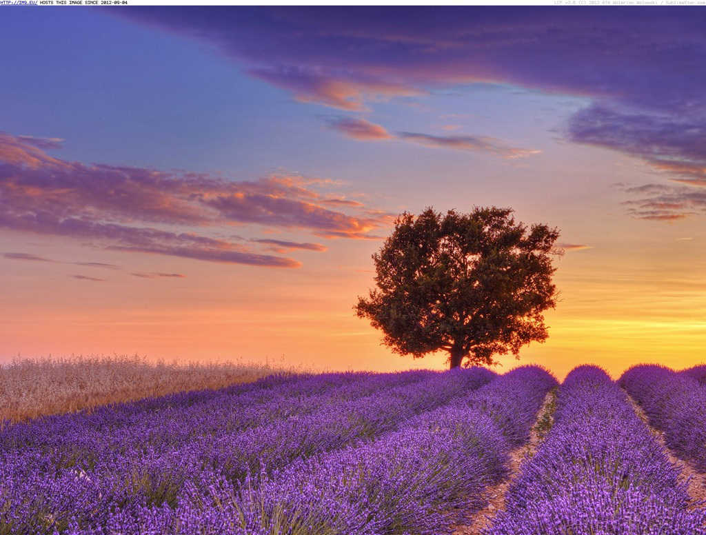Lavender fields provence france for Sfondi 1920x1080