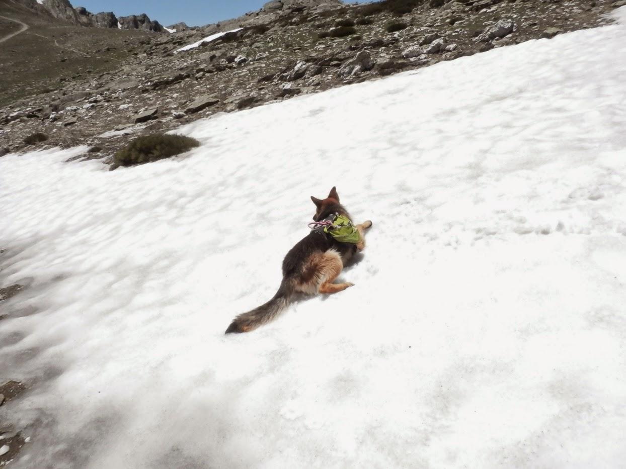 Sherpa-disfrutando-de-un-pequeño-oasis-entre-tanto-calor