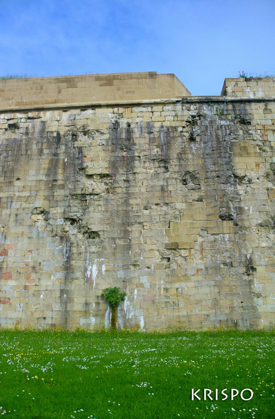 surge un arbol natural en muralla hondarribia