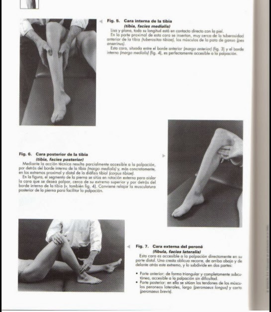 Fisioterapeutas UCJC: Examen de anatomía palpatoria