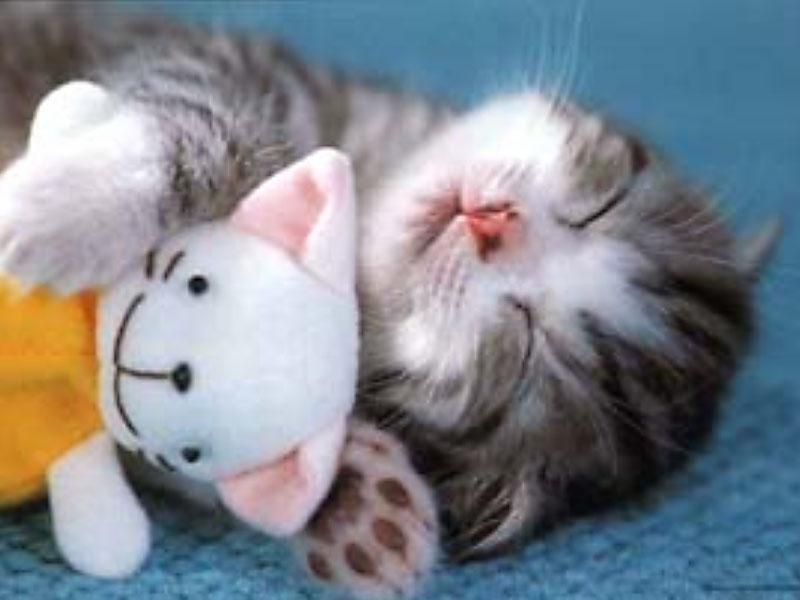 My Top Collection: Cute kittens pics Tabby Persian