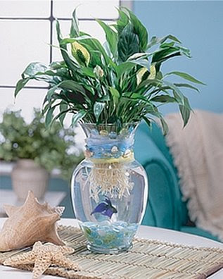 Fish bowl centerpiece #centeripieces #betafish #organizing Ducks 'n a Row