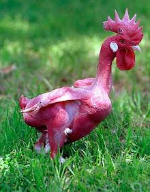 Ayam Bugil