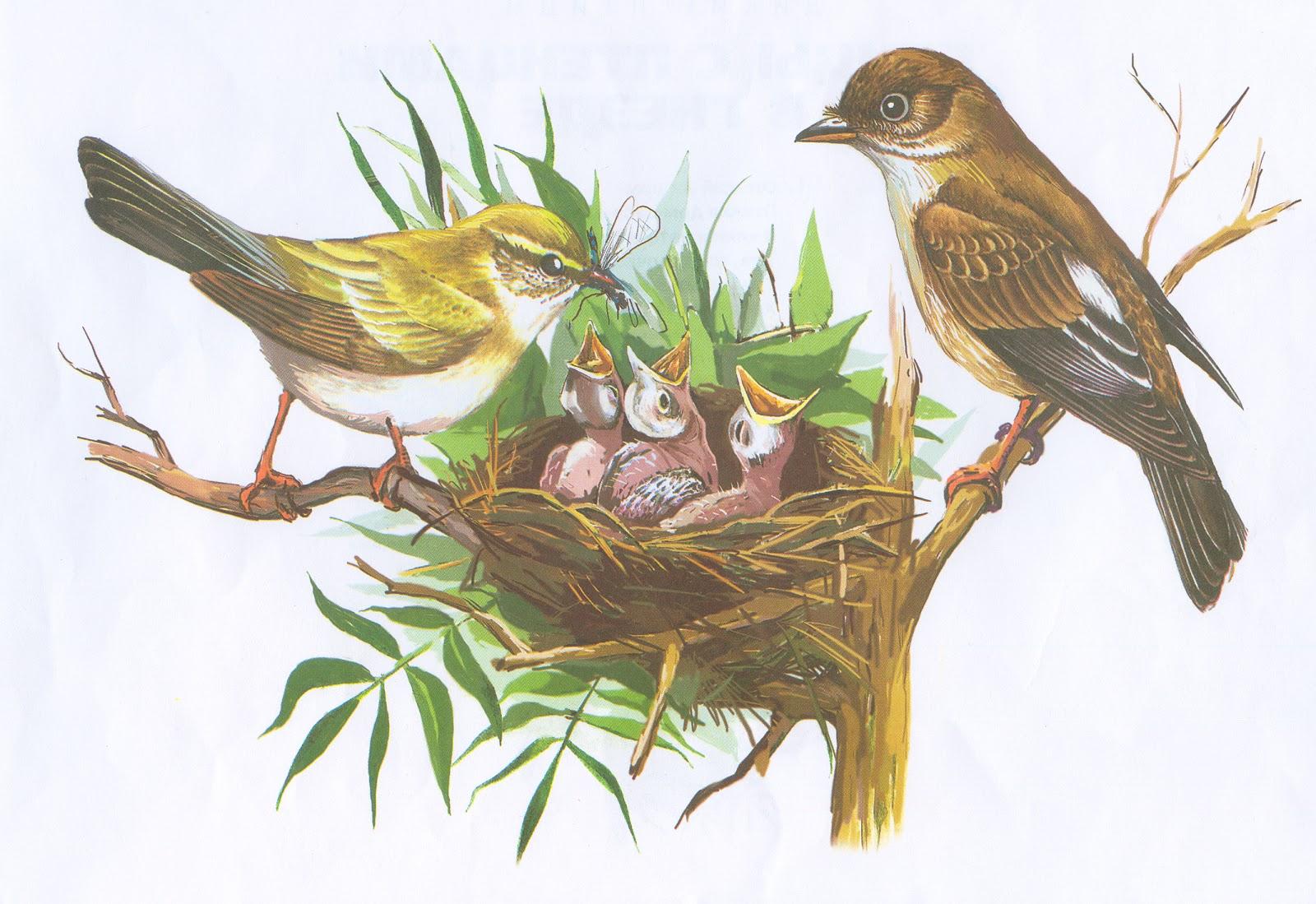 Картинки по запросу перелетные птицы с птенцами картинки для детей