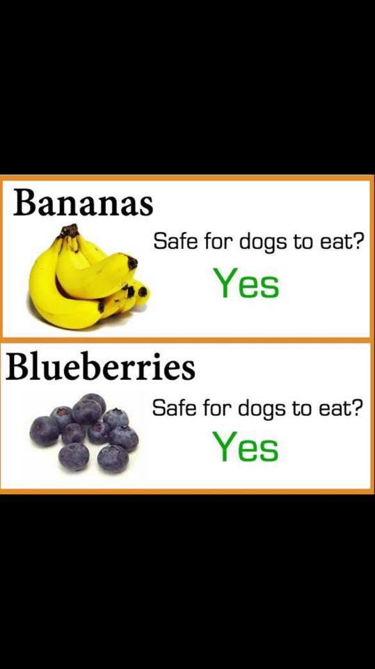 hund spiser ikke