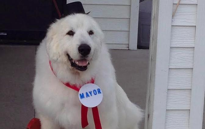 Anjing dipilih sebagai wakil rakyat