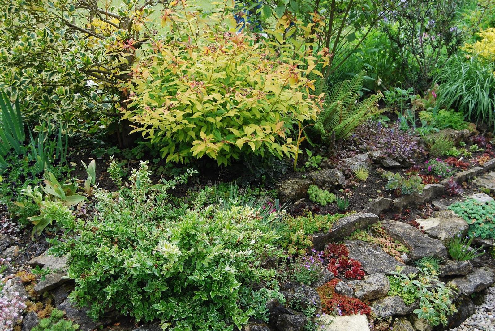 Le blog de parcs et jardins de l 39 oise le jardin d 39 annie olive rieux for Plante et jardins