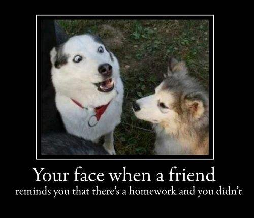 Jokes U0026 Funny Sayings About Dogs 3 Responses To U201cdog Stuck In Trees Funny  Sayingsu201d Funny Dogs: Text, Images, Music, Video | Glogster Loldogs, A Dog  Teaches ...