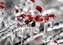 last winter frost