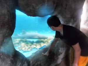 Victor e o Tubarão