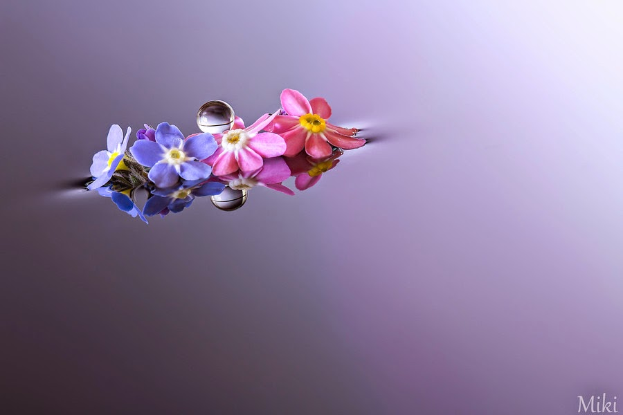 Best Friends Forever by Miki Asai