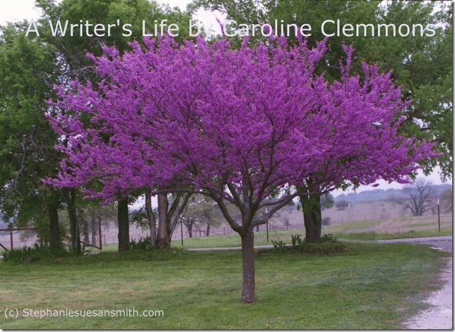 Our Redbud Tree in Spring
