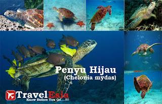 http://www.travelesia.co/2013/03/hoga-island-enchantment-marine-tourism.html