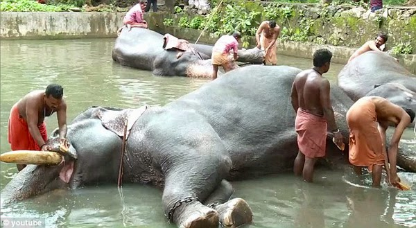 heaven-on-earth-for-elephants-in-kerala-india-img-01