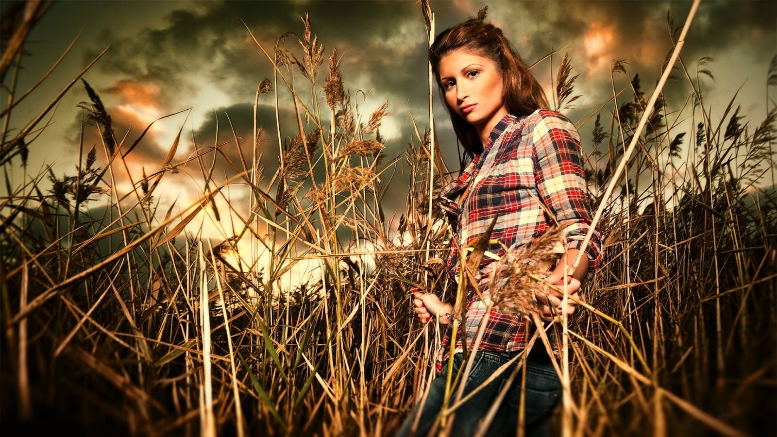 Brunette Model Girl in Wheat Field