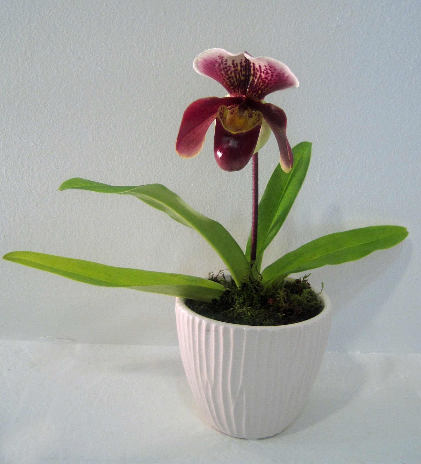 slipper orchid care instructions