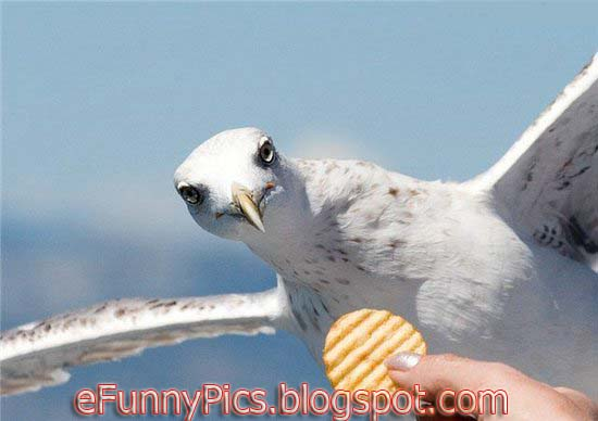 The Seagull and the biscuit
