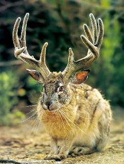 أرنب لديه قرون..سبحان الله!