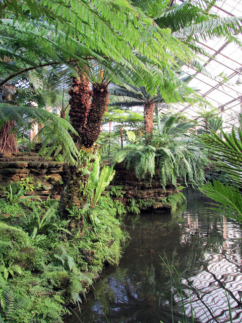 Pond, Fern Room, Garfield Park Conservatory