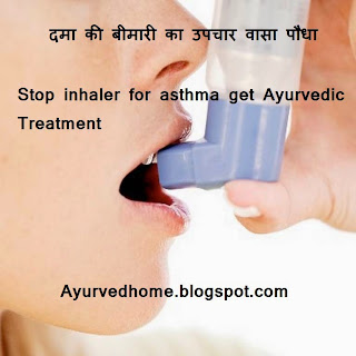 Cure Asthma With Vasa Plant