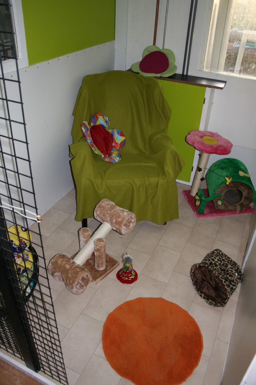 Katten in de wilg de eerste foto 39 s van de huiskamers - Kamer heeft een mager ...