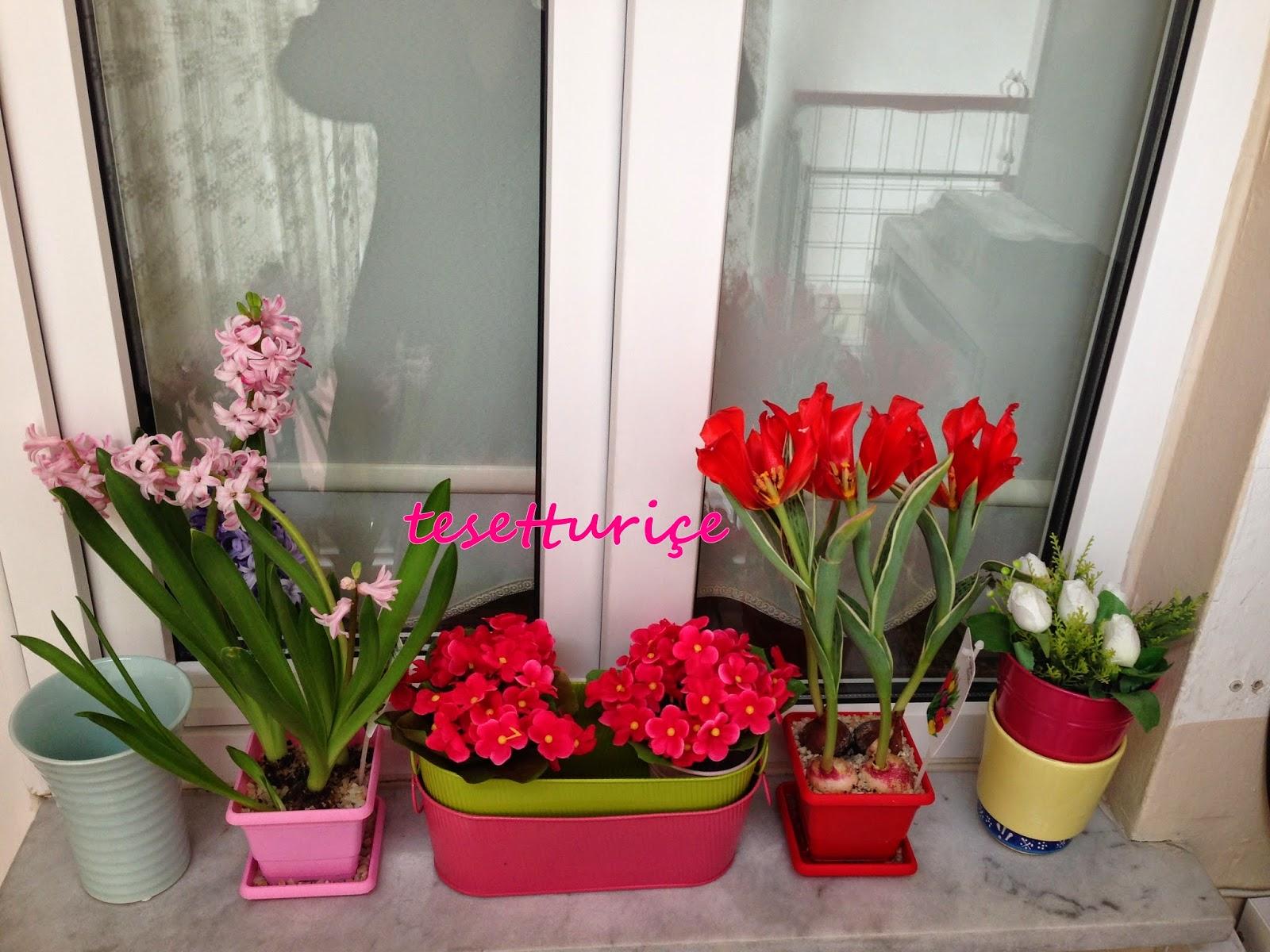 pencere önü çiçeklerim