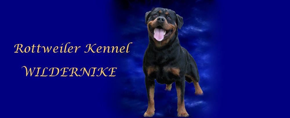 rottweiler psarna Wildernike -- KENNEL WILDERNIKE