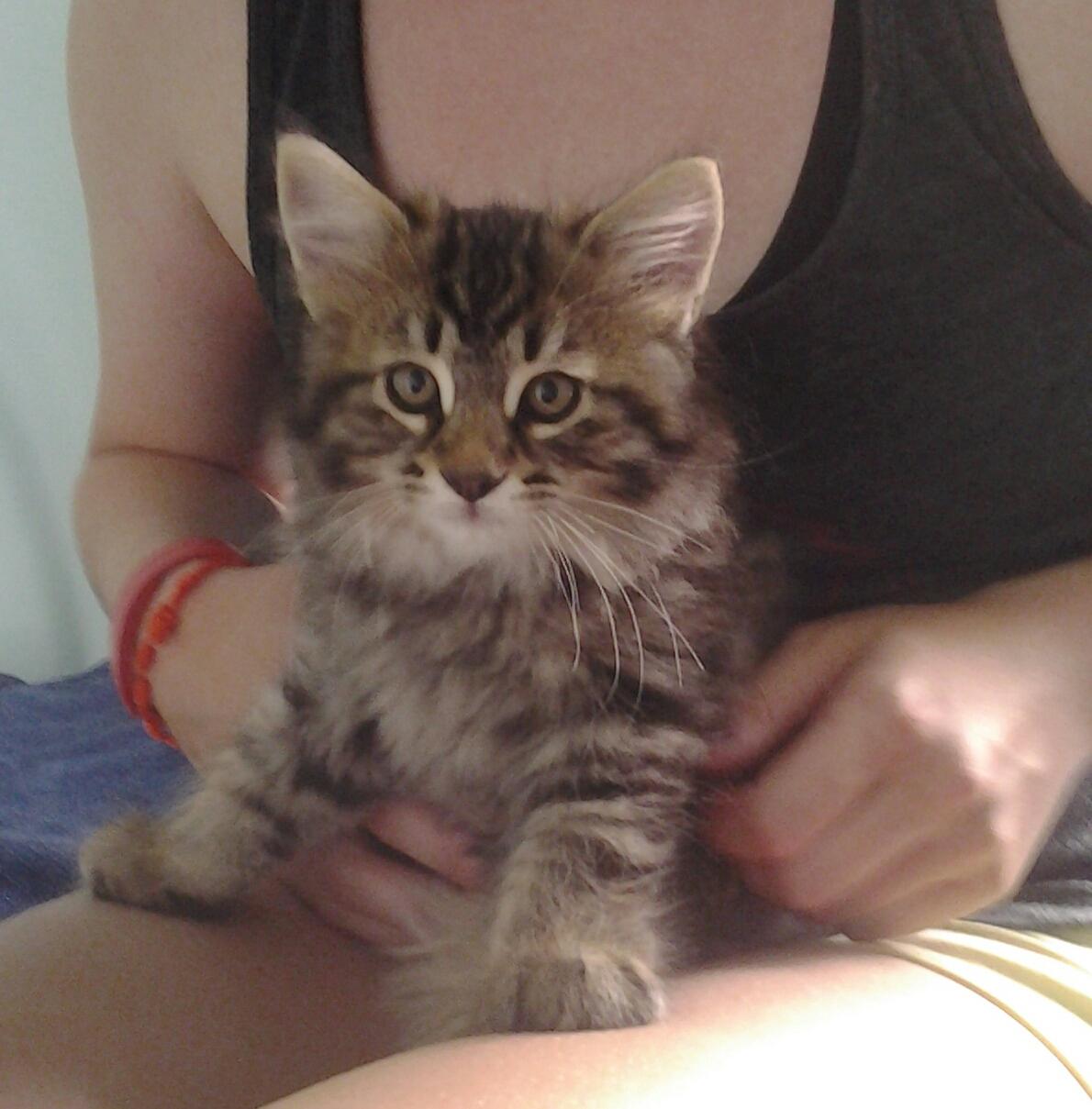Pinteressaie faites un niche pour votre chat en 5 minutes - Couper les griffes d un chaton de 2 mois ...