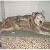 Ξέρετε τίποτα για αυτό τον τραυματισμένο σκύλο;