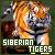 I like Siberian tigers