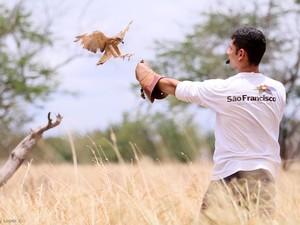 Aves de rapina do Centro são geralmente vítimas da ação humana (Foto: Wesley Lopes/Cemafauna)