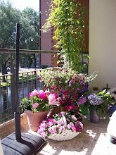 Mijn Balkonplanten