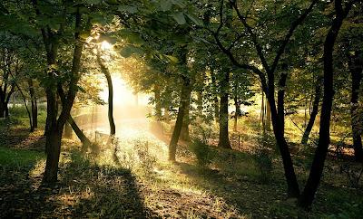 Fondos Verano Bosque