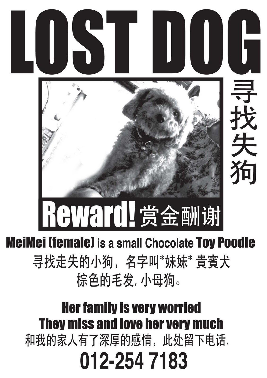 konstudio  lost dog poster