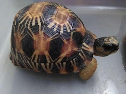 China Seizes Radiated Baby Tortoises Stolen From Madagascar