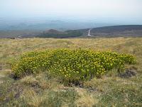 Monte Serra Pizzuta Calvarina