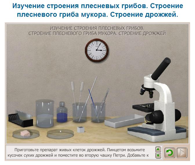 размножение класс таблица растений 2